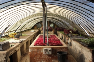 Greenhouse Villa Melzi