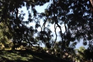 Green in park Villa Melzi